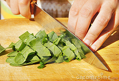 Cutting of leaves of spinach for salad
