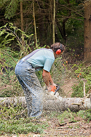 Free Cutting Tree Stock Photography - 10181852