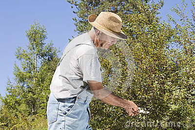 Cutting tree branches and hedge