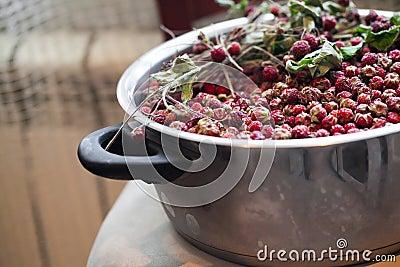 Cuvette avec les fraisiers communs