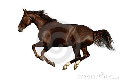 Cwału konia