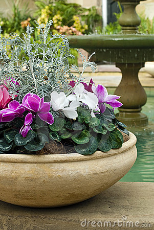 Cyclamen pot and fountain