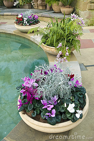 Cyclamen pots ferns and pool