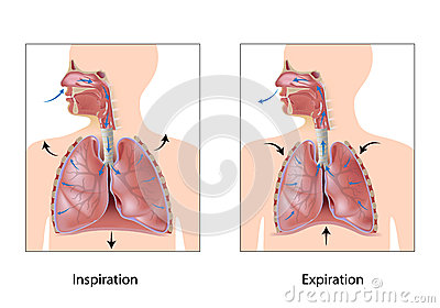 Cycle of breathing