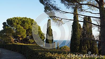Cyprès sur un fond de ciel bleu banque de vidéos