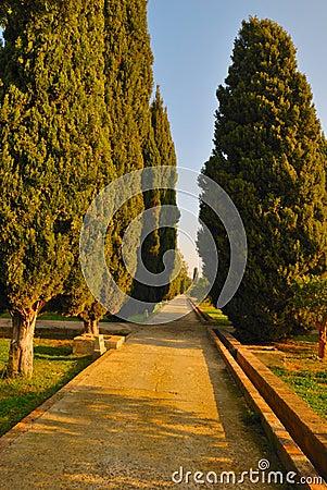 Путь Cypress