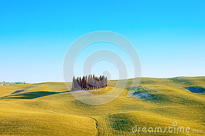 Cypress group and field landscape. Orcia, Tuscany