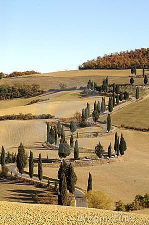 Free Cypress Lane Tuscany Royalty Free Stock Photo - 4741465