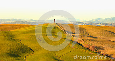 Cypress tree and rolling hills rural landscape in Crete Senesi, Tuscany. Italy