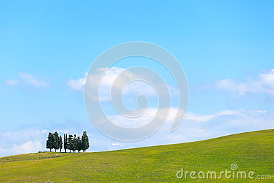 Cypress trees and field rural landscape in Crete Senesi, Tuscany. Italy