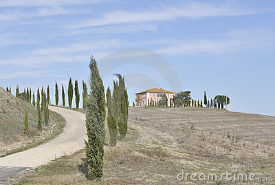 Cypress trees and hilltop Italian Villa