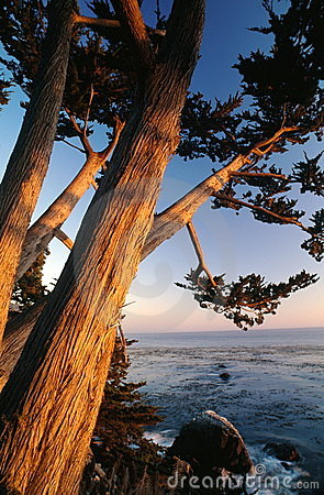 Free Cypress Trees On Shore Royalty Free Stock Images - 2053389