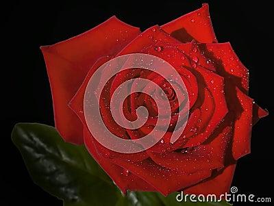 Czarna czerwony