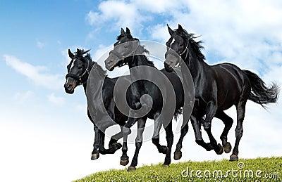Czarne konie