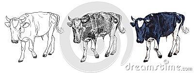 Czarny i biały krowa