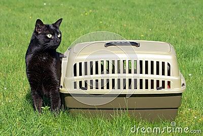 Czarny pudełka kot nowy swój słuszny życie nowy