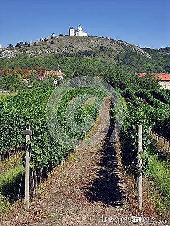 Mikulov with vineyard