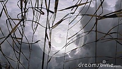 Czerni i koloru żółtego taśmy macha od wiatru w letnim dniu eventide Popielaty cloudness niebo przed ulewnym deszczem zbiory
