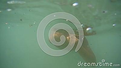 Dålig ekologi, smutsigt vatten, hav, fjärd, hav Pojken simmar under vatten Ta omsorg av naturen lager videofilmer
