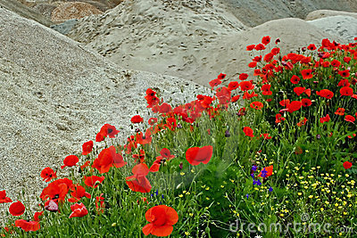 Désert et fleurs 1