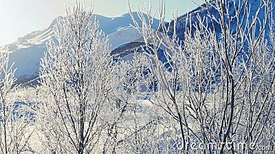 Día de invierno soleado con la helada en las ramas de los árboles almacen de video