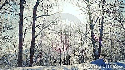 Día de invierno soleado con la helada en las ramas de los árboles almacen de metraje de vídeo
