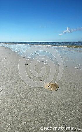Dólar de areia na praia