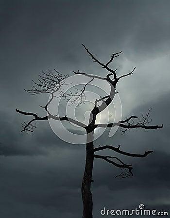 Död tree