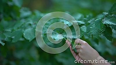 Dłoń kobiety dotykająca liści drzew, naturalistyczna opieka, bezpieczne środowisko, ekologia zbiory