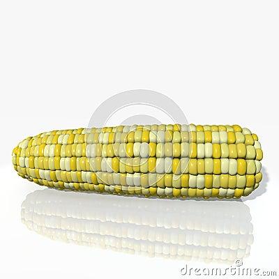 3d Corn Cob