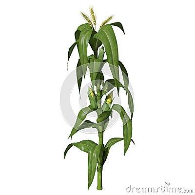 3d Corn Stalk