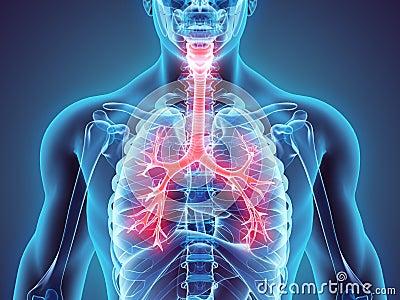 D Illustration Larynx Trachea Bronchi Part Respiratory System