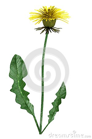 3d render of dandelion Stock Photo