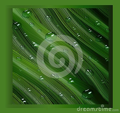 3d, three-dimensional water drops and three-dimensional, green leaves in the style of realism. a realistic background , three- Vector Illustration