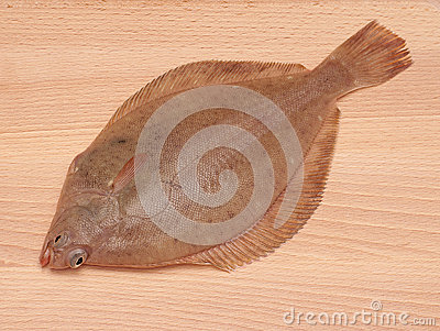 Dab Fish