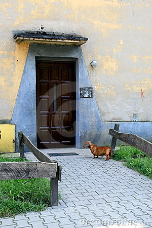 Dachshund in Doorway
