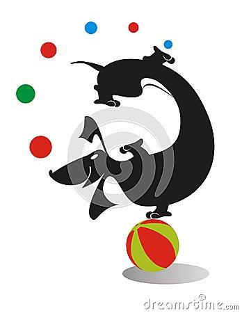 dachshund juggle