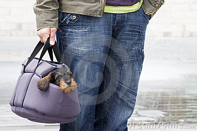 Dachshund puppy in pet carrier