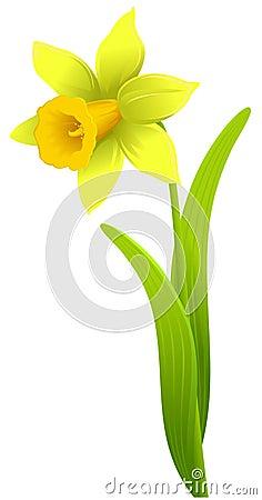 Free Daffodil Stock Image - 4394341