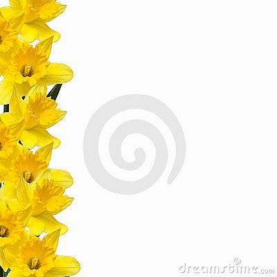 daffodil border royalty free stock image image 692656
