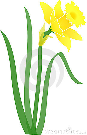 Stock Image: Daffodil-jonquil/eps