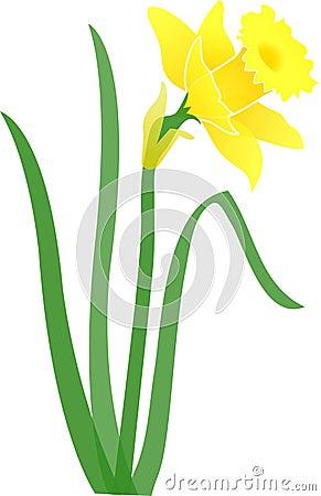 Daffodil-jonquil/eps
