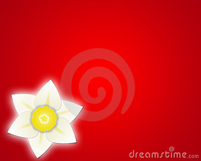 Daffodil red background