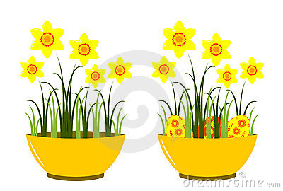 Daffodils in bowl