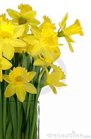Free Daffodils In A Square Glass Vase Stock Image - 694611