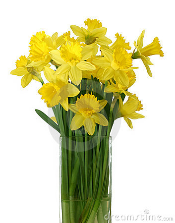 Free Daffodils In A Vase - Isolated Stock Photo - 704100