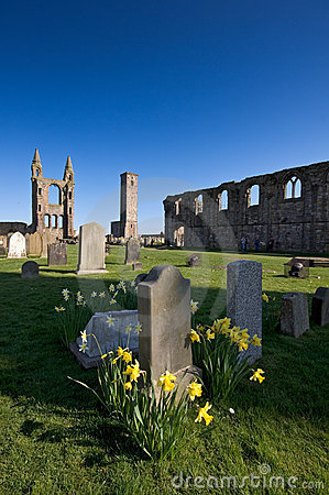 Free Daffodils In St Andrews Cathedral Grounds Stock Photos - 18560983