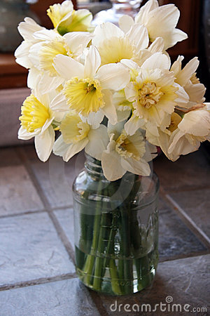 Daffodils in Jar