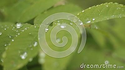 dagg låter vara regn lager videofilmer