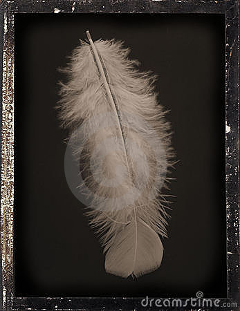 Dagguereotype Still-Life  white feather